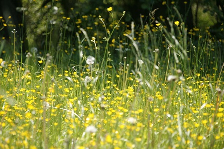 How to tell the difference between coronavirus and hay fever