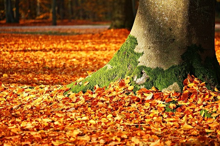 Awesome autumn ideas for things to do Cambridge