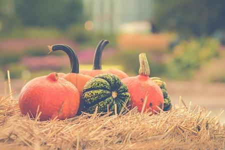 pumpkin-2989569_1920